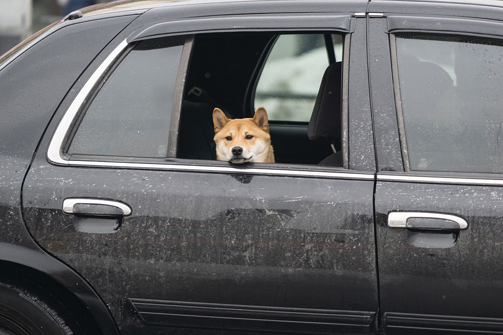 Why Should I Tint My Car Windows?